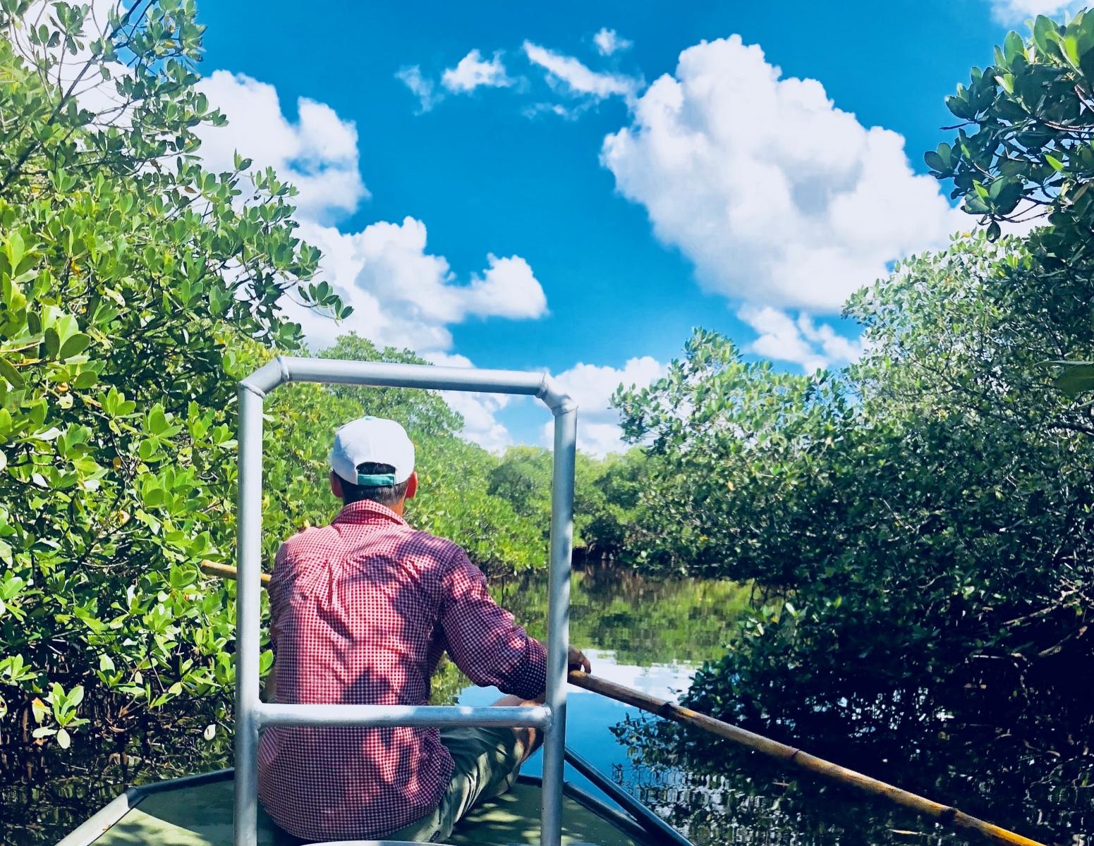 Mangroves poling